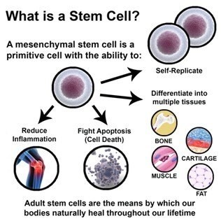 Stem cell therapy and treatment can help relieve your pain